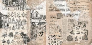 TIMES 12 (12,5x 25)
